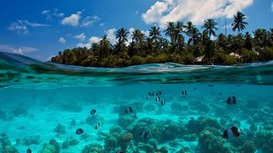 Foto : Snorkeling di Lombok Timur