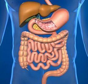 Bakteri Baik