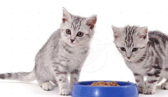 Cara Memilih Makanan Berkualitas dan Sehat Khusus Kucing!
