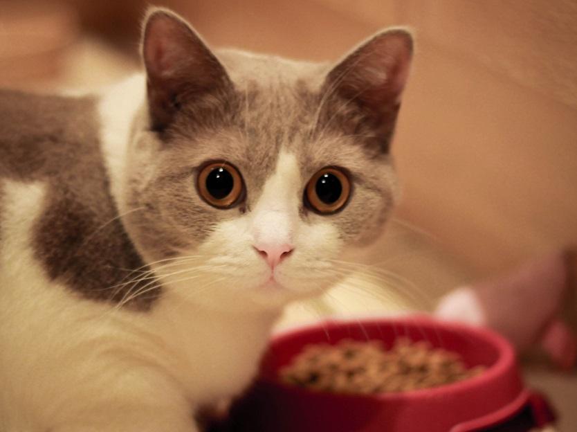 Cara Mudah Untuk Merawat Kucing Anggora
