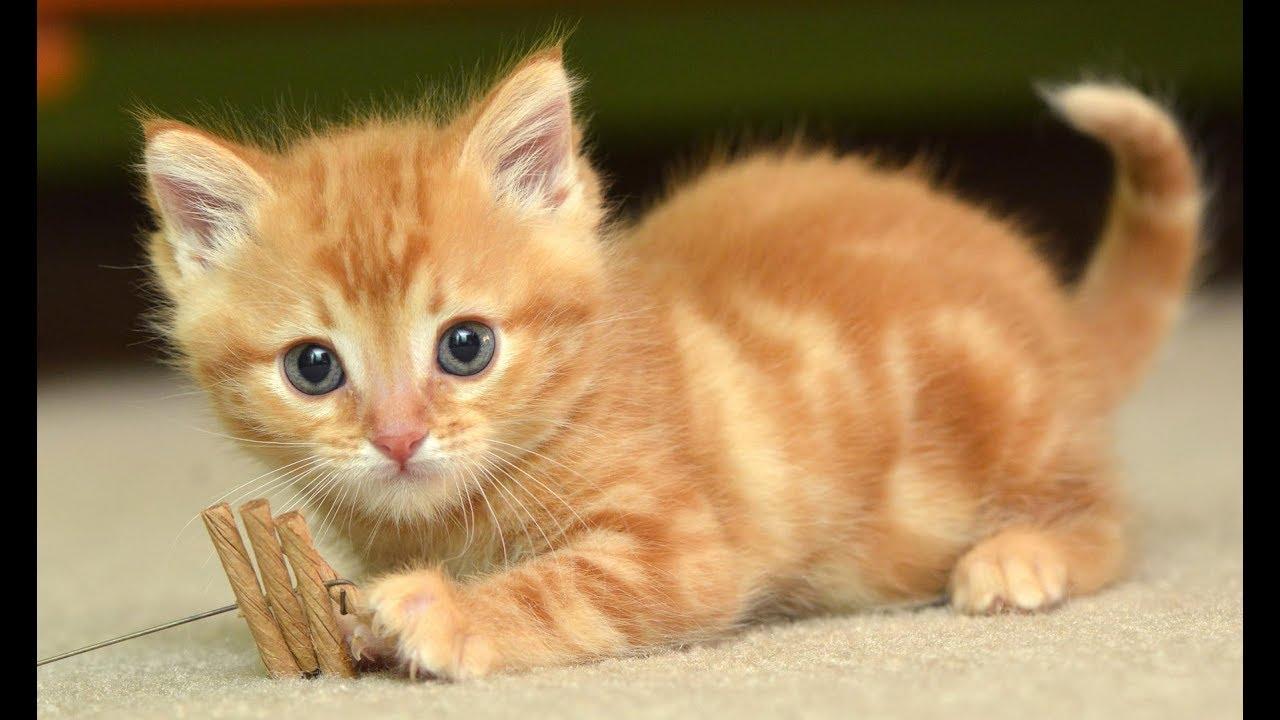 Tips Membawa Rumah Kucing Baru, Wajib Tahu!