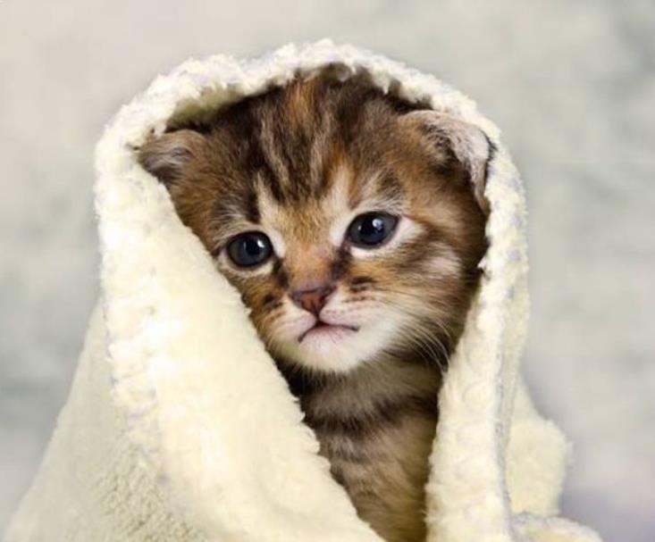 Kiat Perawatan Kucing Terbaik, Anda Dapat Mempelajarinya!