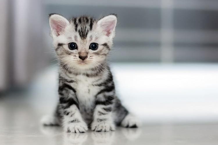 Perawatan Kucing yang Perlu Anda Ketahui