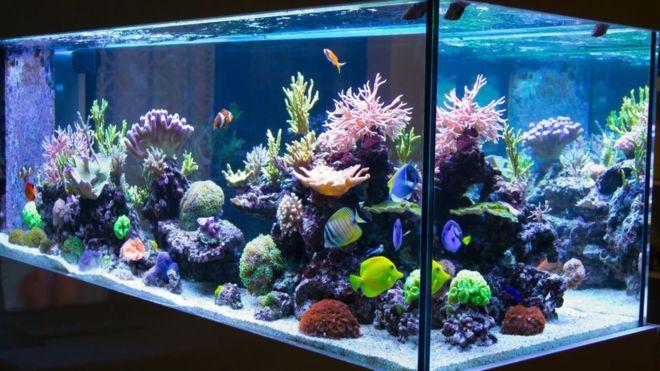 Beberapa Cara Membuat Aquarium Air Laut untuk Pemula