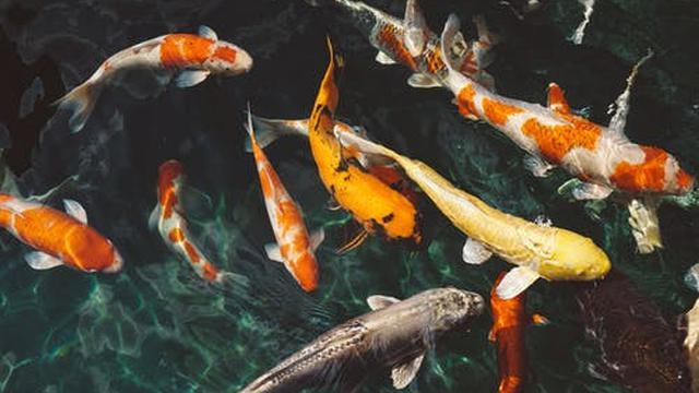 Benefit of Fish