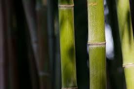 Bisnis Bambu