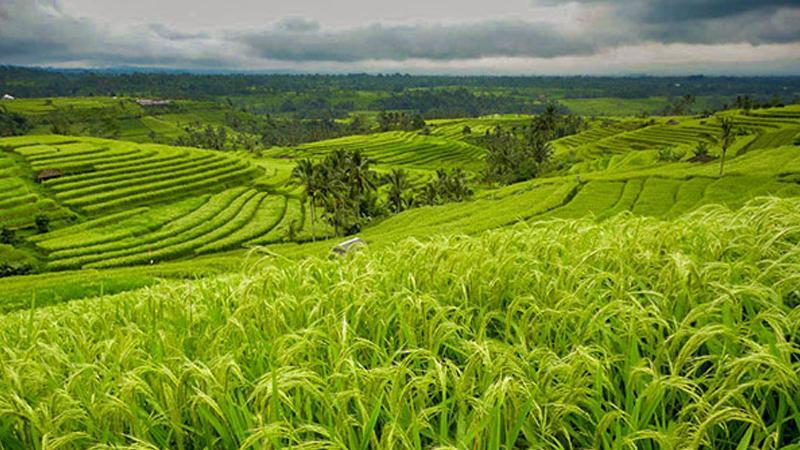 Rekomendasi Ide Bisnis Pertanian
